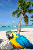 Caraïbisch strand Stock Afbeelding