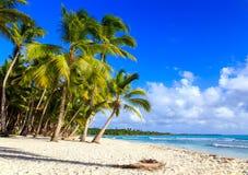Caraïbisch strand in Dominicaanse Republiek stock afbeeldingen