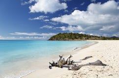 Caraïbisch Strand met Drijfhout, Antigua royalty-vrije stock foto
