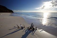 Caraïbisch Strand met Drijfhout en Zon, Antigua stock afbeeldingen