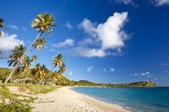 Caraïbisch Strand met Kokosnotenpalmen, Antigua stock foto's