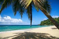 Caraïbisch strand met palm stock foto