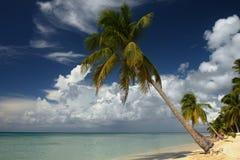 Caraïbisch strand met palm royalty-vrije stock afbeeldingen