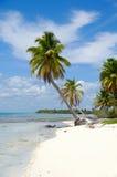 Caraïbisch strand met palm en wit zand Royalty-vrije Stock Foto's
