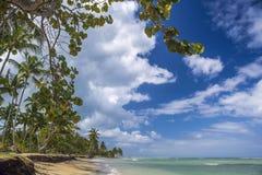 Caraïbisch strand met palmen Stock Foto's