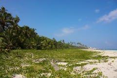 Caraïbisch strand met tropisch bos. Colombia Stock Afbeeldingen