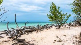 Caraïbisch strand van Cayo Jutias, Cuba Wilde aard met een boom op het strand Royalty-vrije Stock Foto's
