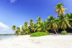 Caraïbisch wild strand stock afbeeldingen