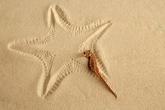 Caraïbisch zand seahorse over zeestervoetafdruk royalty-vrije stock foto's