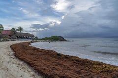 Caraïbisch zandig die strand door het zeewier van sargassoalgen in Tulum Mexico wordt behandeld stock afbeelding