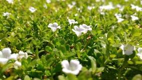 Caraïbische Bloemen Stock Fotografie
