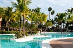 Caraïbische kokosnotenpalmen Royalty-vrije Stock Afbeeldingen