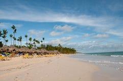 Caraïbische kokosnotenpalmen Stock Foto's