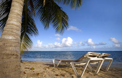 Caraïbische Ligstoelen en Palm Stock Foto