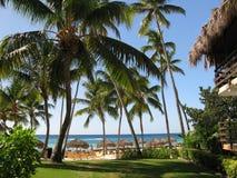 Caraïbische overzees en palm. Royalty-vrije Stock Afbeeldingen