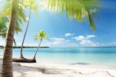 Caraïbische overzees en palmen Stock Foto