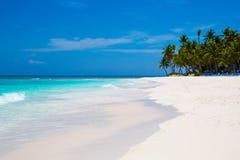 Caraïbische overzees en palmen Stock Afbeelding