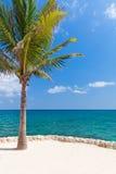 Caraïbische overzees met eenzame palm Royalty-vrije Stock Afbeeldingen