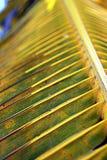 Caraïbische palm Royalty-vrije Stock Afbeeldingen