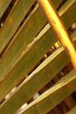 Caraïbische palm Royalty-vrije Stock Foto