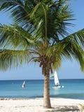 Caraïbische palm en overzees. Stock Afbeeldingen