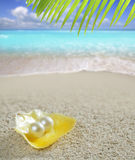 Caraïbische parel op shell wit tropisch zandstrand Royalty-vrije Stock Afbeelding