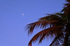 Caraïbische stranden Stock Afbeeldingen