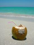 Caraïbische strandkokosnoot royalty-vrije stock afbeeldingen