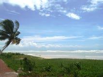 Caraïbische winden Stock Foto's
