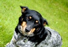 Cara adorable de un perro que se sienta en la hierba Fotos de archivo