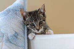 Cara adorable del gatito fotografía de archivo