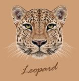 Cara animal do leopardo Vetor africano, retrato principal do gato selvagem asiático Retrato realístico da pele do leopardo exótic ilustração stock