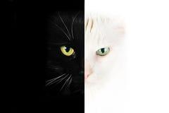 Cara blanco y negro del gato Foto de archivo libre de regalías
