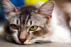 Cara bonito do gato no fim acima Imagens de Stock Royalty Free