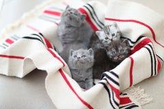 Cara bonito, gatinhos recentemente carregados que olham acima Fotografia de Stock