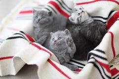 Cara bonito, gatinhos recentemente carregados que olham acima Fotos de Stock Royalty Free