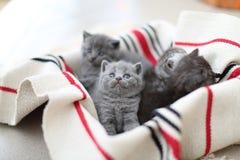 Cara bonito, gatinhos recentemente carregados que olham acima Imagens de Stock