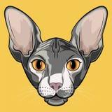 Cara cinzenta isolada bonito do gato da esfinge ilustração royalty free