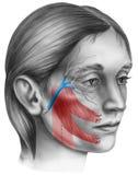 Cara - cirugía congelada de la cara Imágenes de archivo libres de regalías