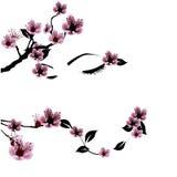 Cara con las flores de la cereza