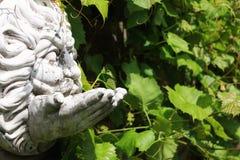 Cara concreta de la ejecución delante de las hojas de la uva de vino Imagen de archivo libre de regalías