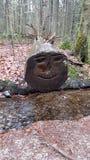A cara cutted em uma árvore na floresta bávara (Alemanha) Fotografia de Stock Royalty Free