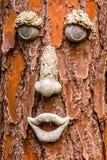Cara da árvore Imagens de Stock