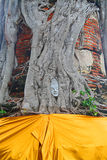 Cara da estátua da Buda na árvore Fotos de Stock Royalty Free