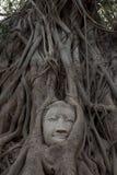 Cara de Buddha de la piedra arenisca Fotografía de archivo libre de regalías