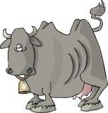 Cara de la carne de vaca Fotos de archivo libres de regalías
