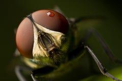 Cara de la mosca Foto de archivo libre de regalías
