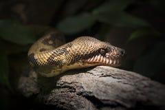Cara de la serpiente en la madera Imagenes de archivo