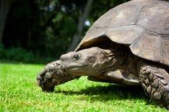 Cara de la tortuga foto de archivo libre de regalías