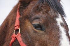 Cara de los caballos imagenes de archivo